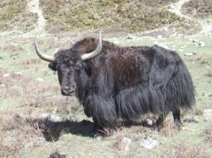 NEPAL 2010 04 267