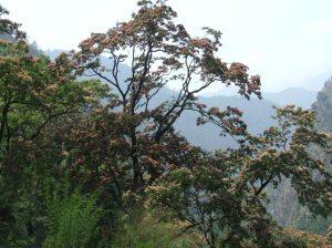 NEPAL 2010 04 495