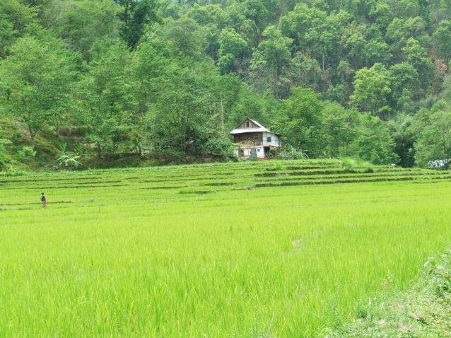 Solu 2016 rizière vers Chalise